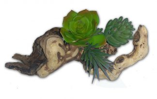 8″ Succulent on Driftwood Cage Decoration