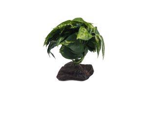 Tropical Plants on Stone Plants