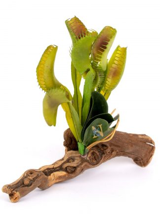 Venus Fly Trap on Driftwood Cage Decoration