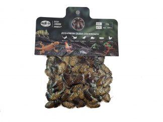 Probugs Dubia Roach Bulk Bag (150 gram) Probugs