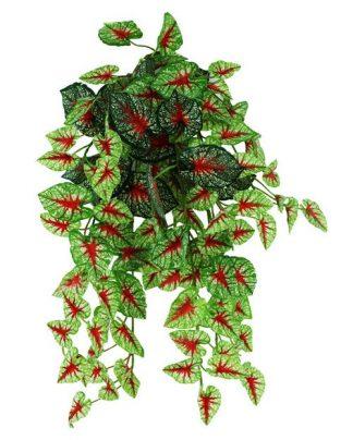 Pangea Hanging Bush 18″ Caladium Vines