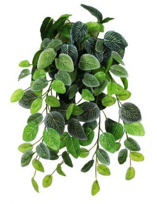 Pangea Hanging Bush 18″ Fittonia Vines