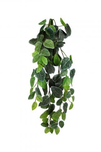 Pangea Hanging Bush 24″ Fittonia Vines
