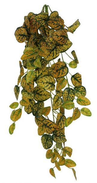 Pangea Hanging Bush 24″ Japanese Laurel Vines
