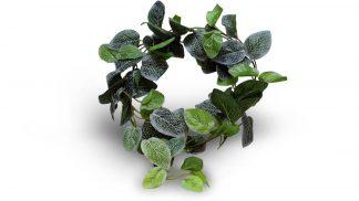 Pangea Leafy Vine Fittonia Vines