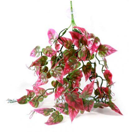 Pangea Plants Red Vines