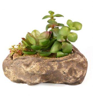 Pangea Succulent Garden #2 Plants