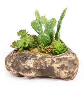 Pangea Succulent Garden #4 Plants