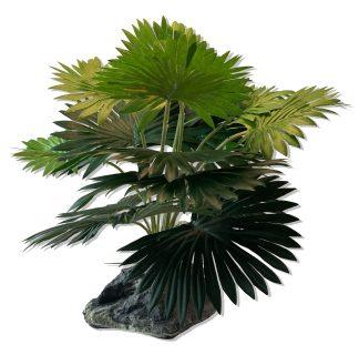 Mini Fan Palm Plants