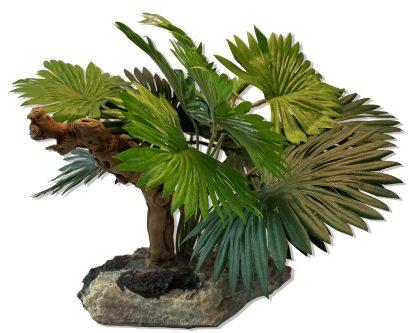 Mini Fan Palm w/ Driftwood Plants